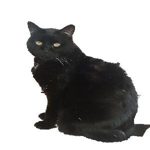 lost male cat aja