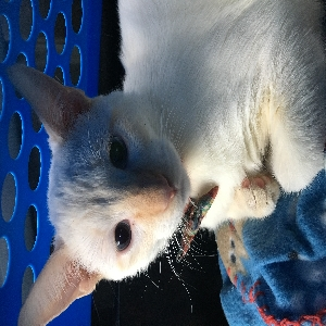 lost male cat ranger