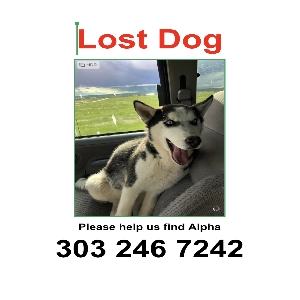 lost male dog alpha