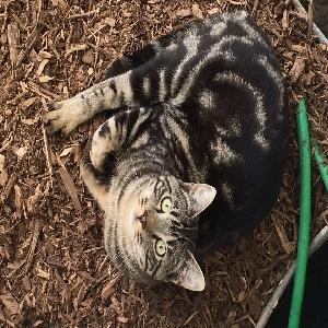 lost male cat kip