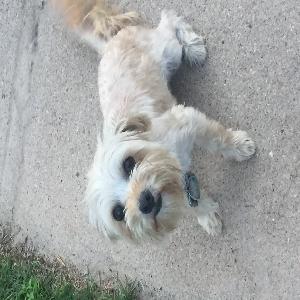 lost female dog tuscany