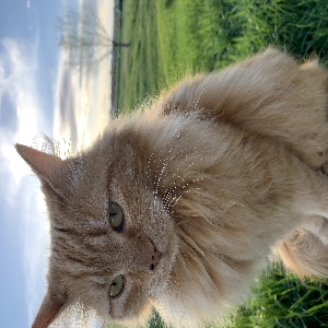 lost male cat cedar
