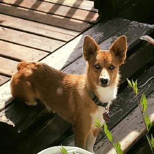 lost female dog sunni