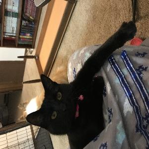 lost female cat wonton