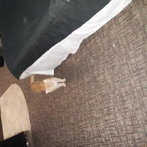 lost male cat sammy