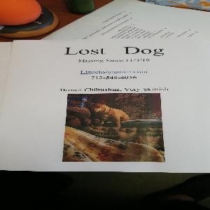 lost female dog chitty