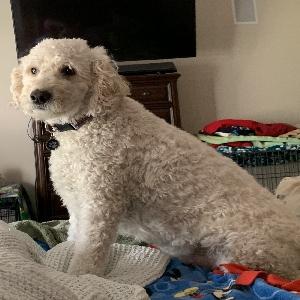 lost male dog astro