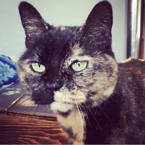lost female cat murray