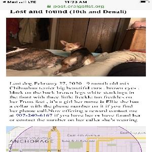 lost female dog ellie