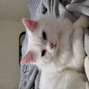 lost male cat nimbus