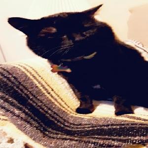 lost male cat midnight