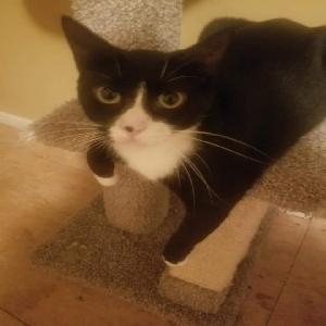 lost female cat beerus