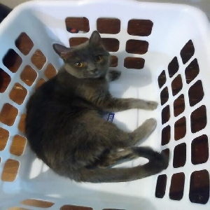 lost female cat ava aka baby girl