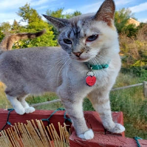 lost female cat lovely luna
