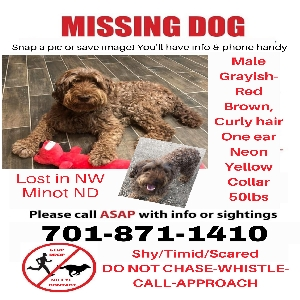 lost male dog friday