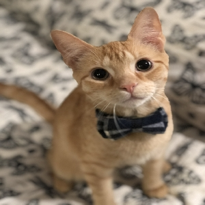 lost male cat peanut butter