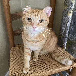 lost male cat vincent