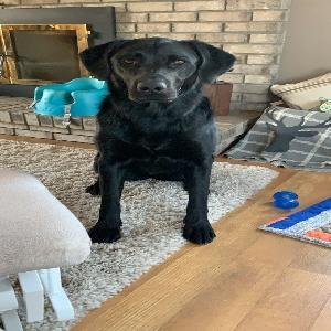 lost female dog kya