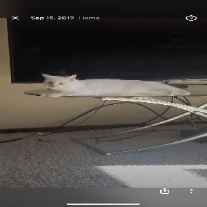 lost female cat blue but answers to bunny
